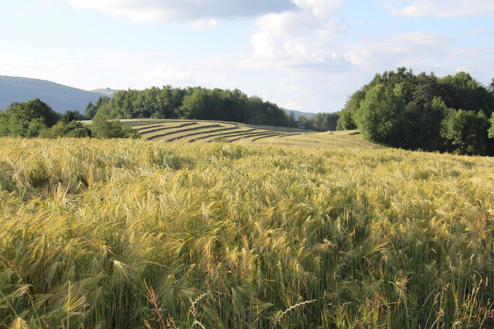 Plateau-Bornes