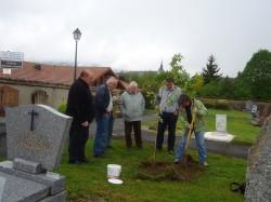Plantation du cerisier dans le cimetière