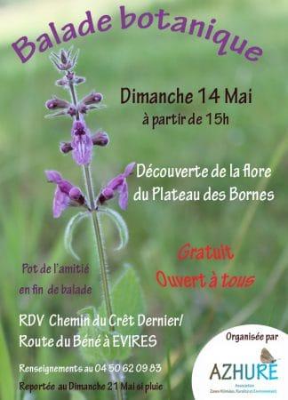 Balade botanique le 14 mai 2017