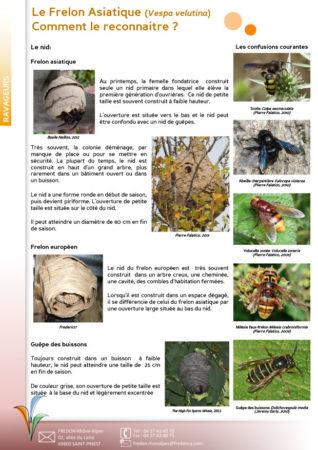 Le frelon asiatique, comment le reconnaître ?