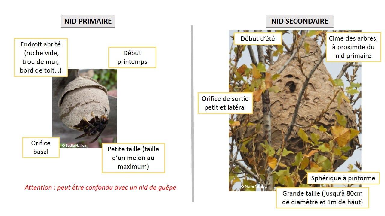 frelon asiatique et recherche de nids menthonnex en bornes. Black Bedroom Furniture Sets. Home Design Ideas