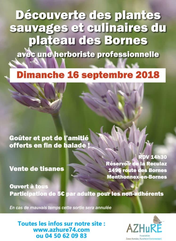 Découverte des plantes sauvages et culinaires le dimanche 16 septembre 2018