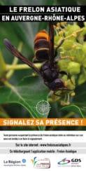 Flyer sur le frelon asiatique
